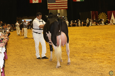 WDE Holstein Int Cows 2016