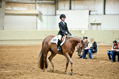 Youth Equitation