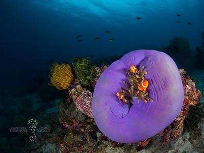 Reefs & Wrecks