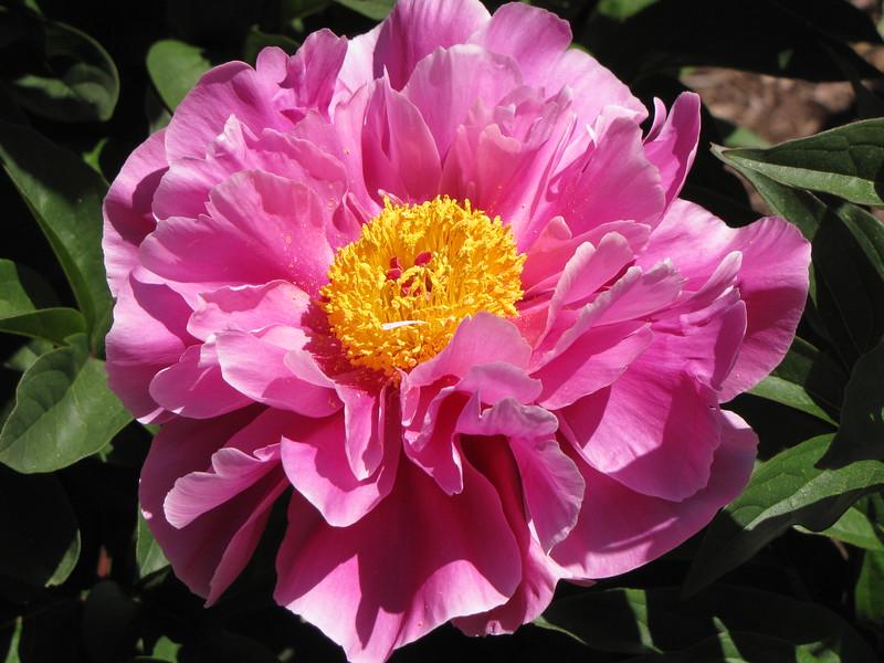 amh FLOWERS (1050).jpg
