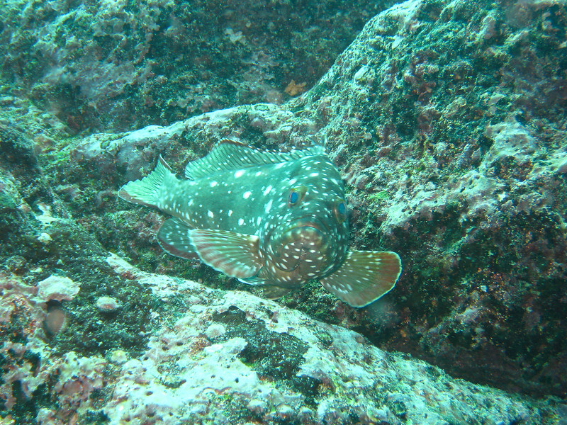 Diving in the Galapagos (298 of 392)