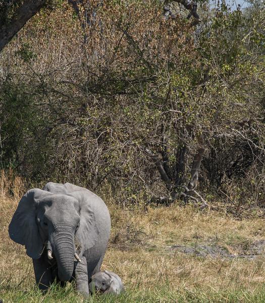 Botswana_June_2017 (3391 of 6179).jpg