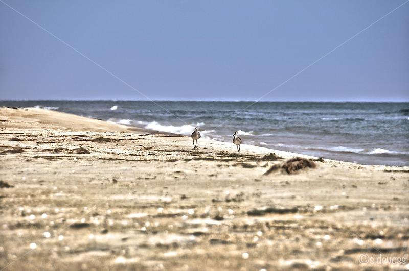 beachPeaIslandHDR_0290 Wmark.jpg