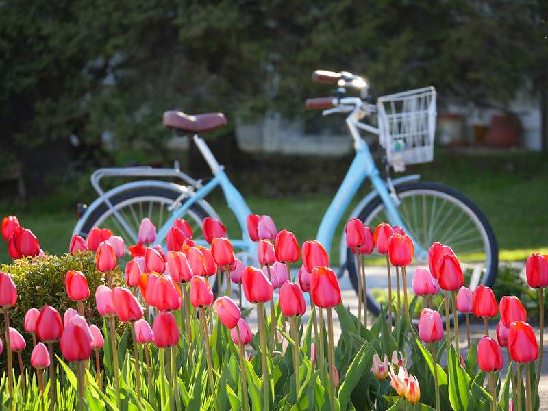 TulipBike MacinawIsland.jpg