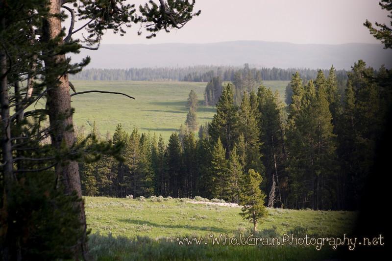 20100713_Yellowstone_2877_1.jpg