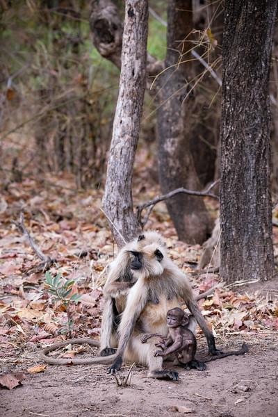 India_April_2019-2107.jpg