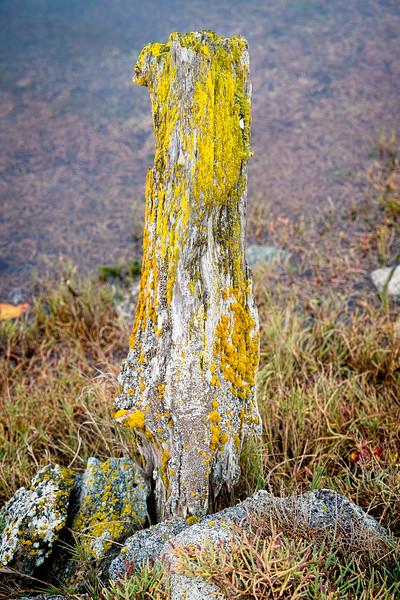 A yellow moss-coverd wooden post.
