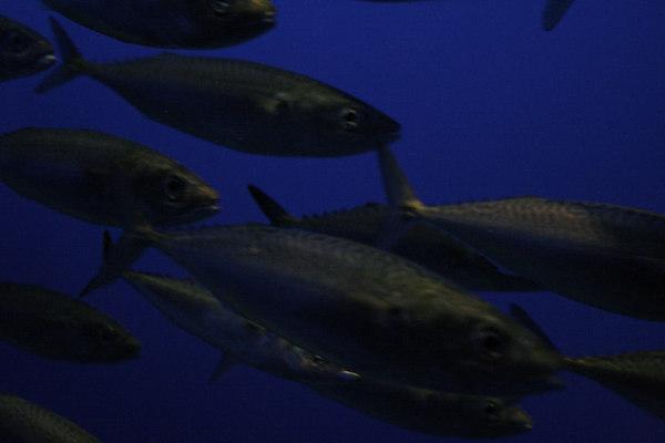 Monterey Bay Aquarium (X)