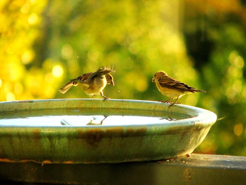 birds (176).jpg