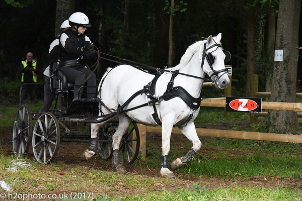Carriage Driving Championships (09-Sep-17) - Cirencester (D500)