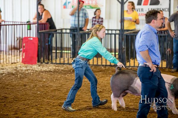 Div 08 Hog Showmanship