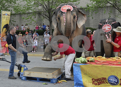 elephants-to-perform-for-final-time-sunday-at-ringling-bros-and-barnum-bailey-circus