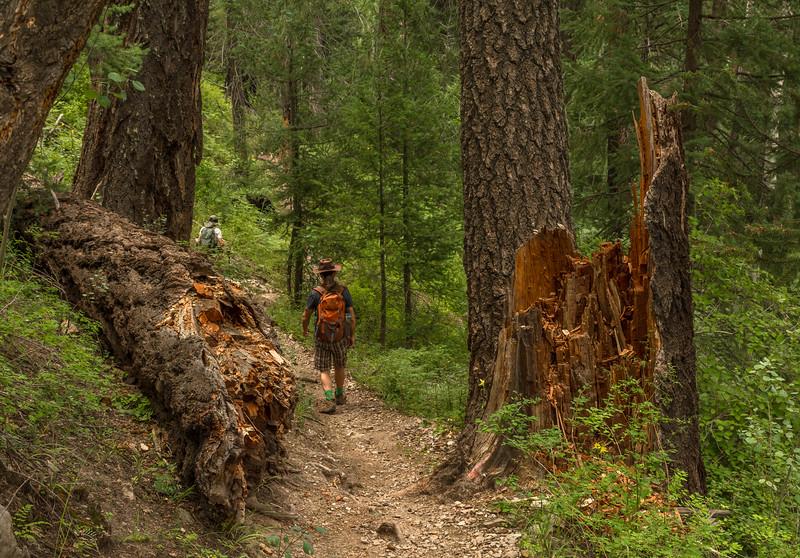 Mt Lemmon Old Growth Fallen Tree Across Trail