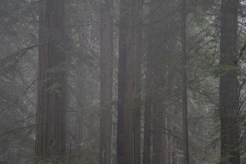 redwoodsFin29-1219.jpg