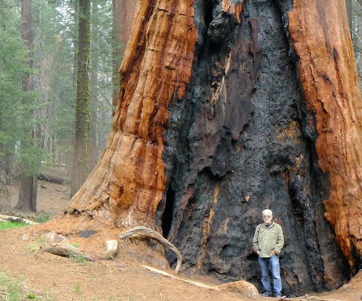 California Day 6 Sequoia 05-30-2017 120.JPG
