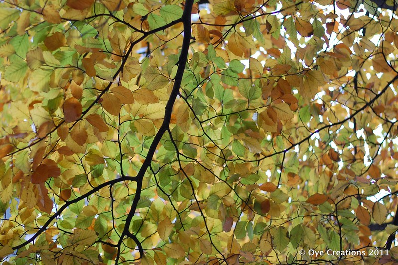 15 - Green and Gold Leaves - Nov 29th_c_w.jpg
