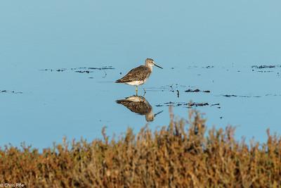 Baylands Birds, October 2020