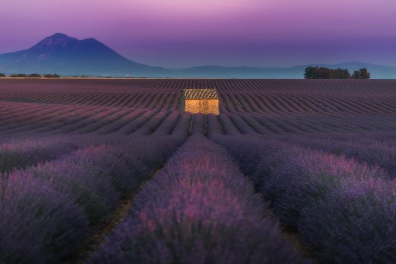 Lavender Immersion
