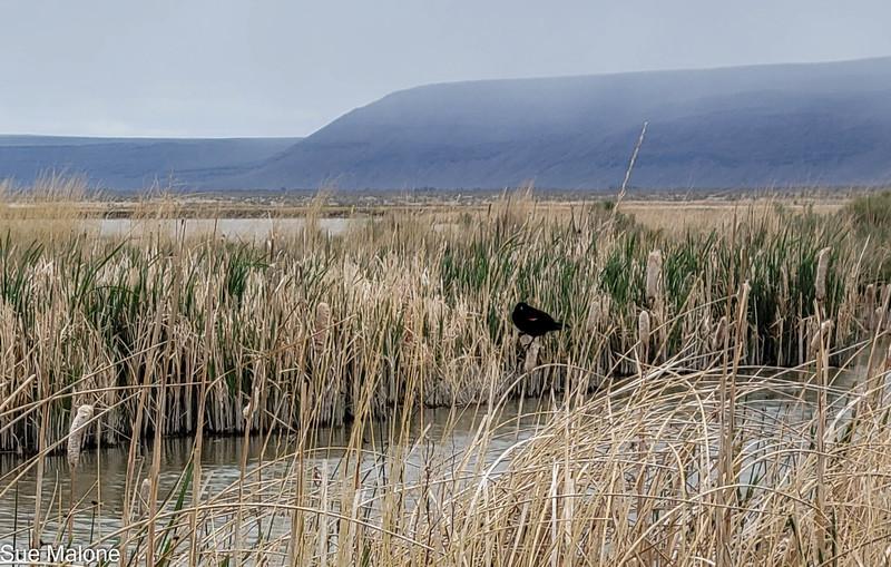 05-19-2021 Summer Lake Wildlife Refuge-26.jpg