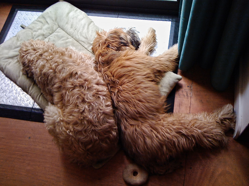 NappingBuddies.jpg