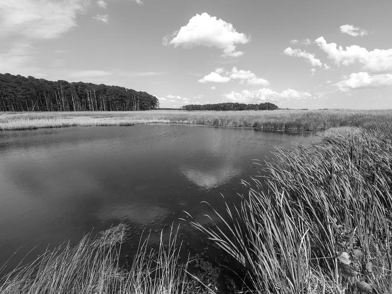 Blackwater Landscape - Monochrome