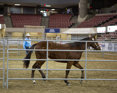 2017 NILE Gold Buckle Horse Futurities