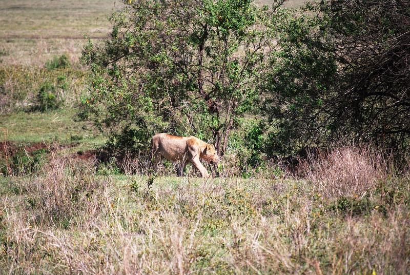 Ngorongoro (90).JPG
