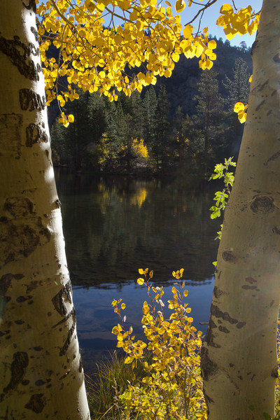 Silver Lake, West side