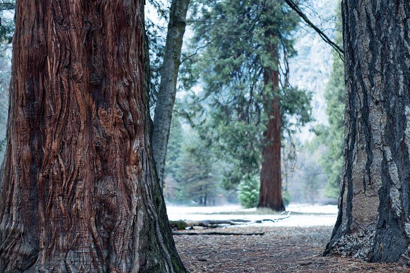 20141213_Yosemite_2924.jpg