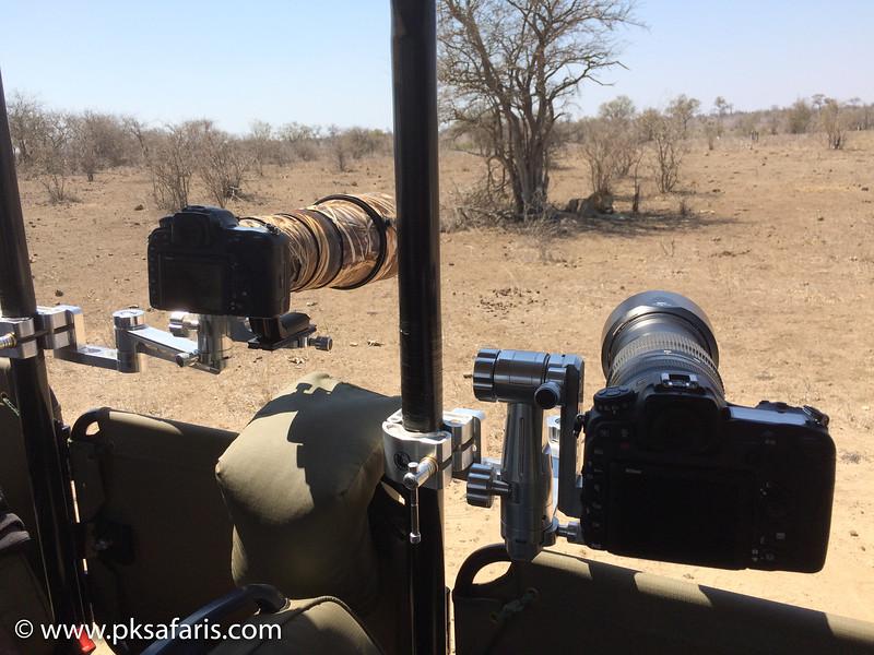B1 Photo Safaris