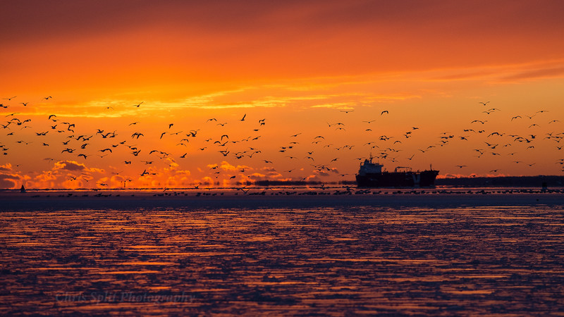 sunset dec 29 ship and birds 3 2017 (1 of 1).jpg