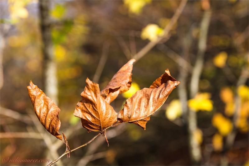 2017-10-28 Herbst - 0U5A8124.jpg