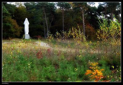 Herfst rond de Hesselsberg (Zutendaal)