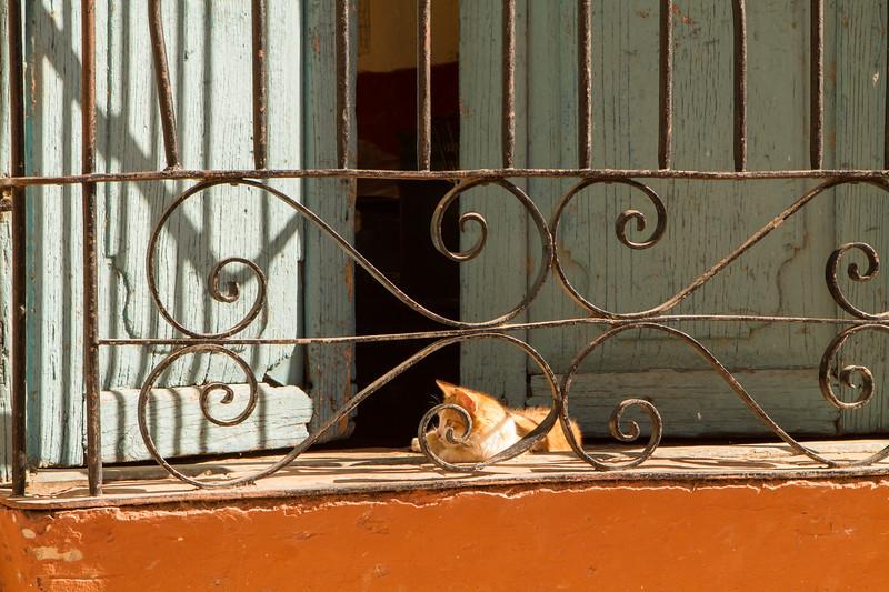 kiel-cats-04.jpg