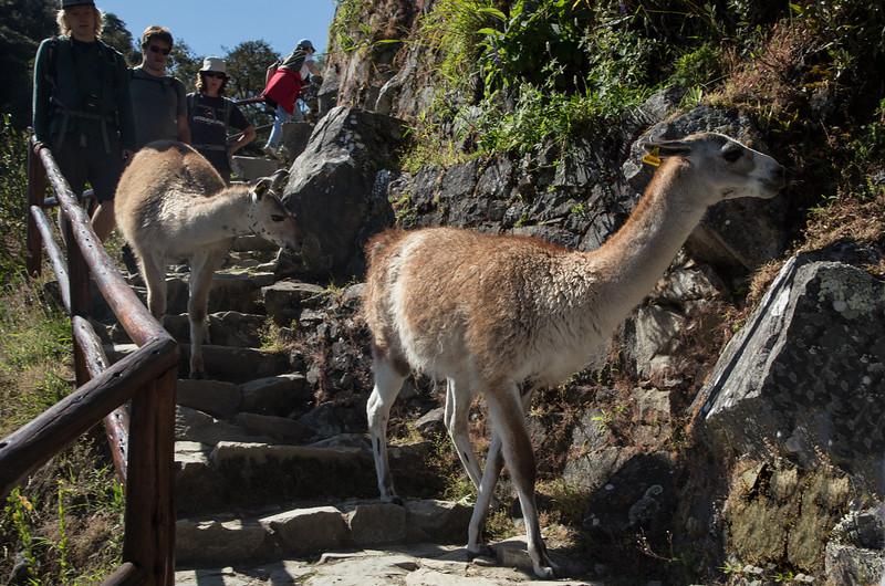 Machu Picchu_MG_3263.jpg