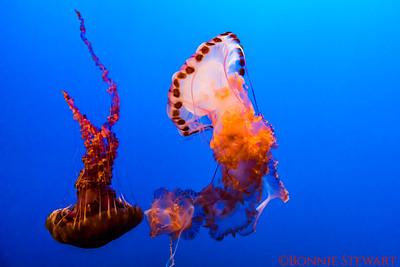 California, Monterey Bay Aquarium