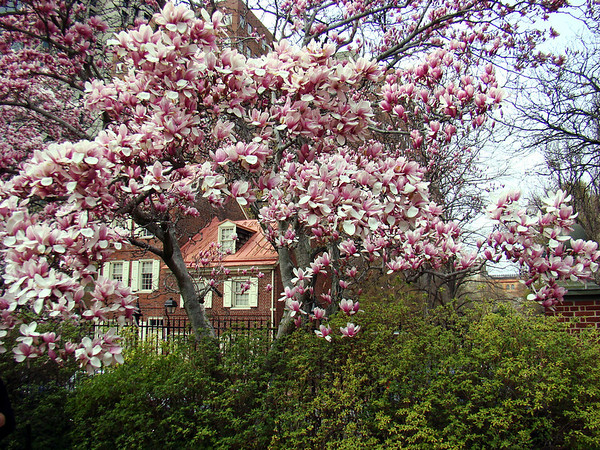 Spring Blossoms in Philadelphia, PA