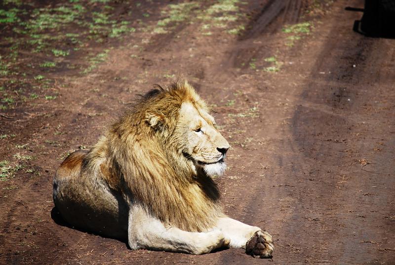 Ngorongoro (118).JPG