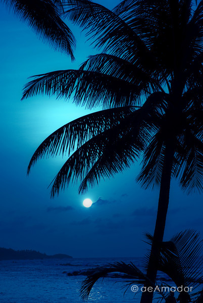 """Night Blue""