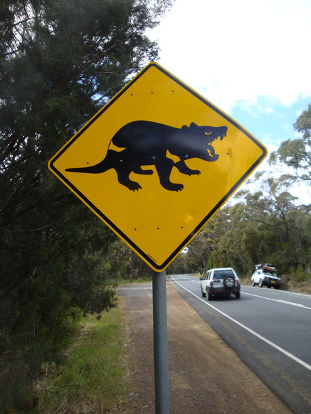 Tasmanian devils are among the wildlife motorists need to take care to avoid.