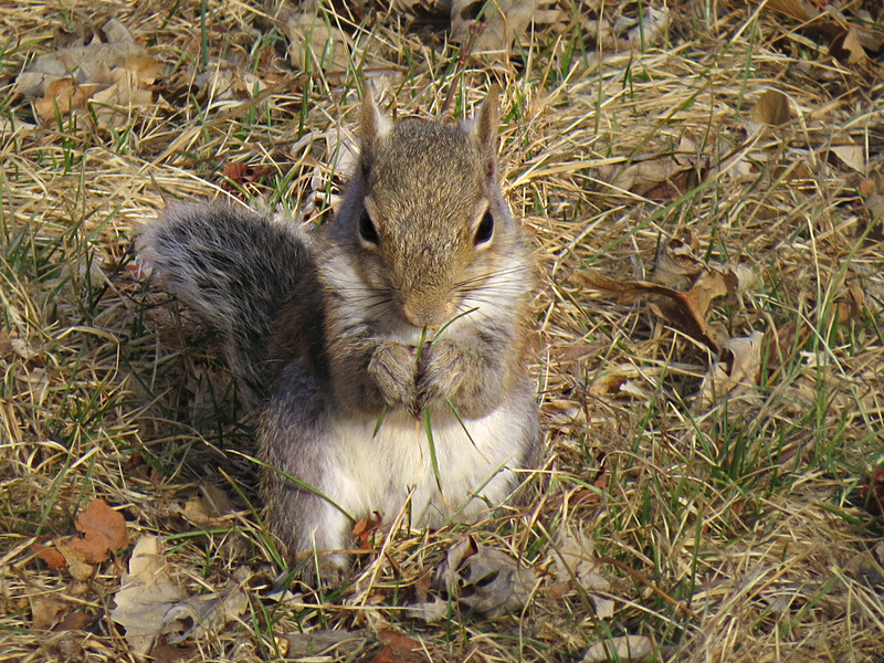 sx50_squirrel_051.jpg