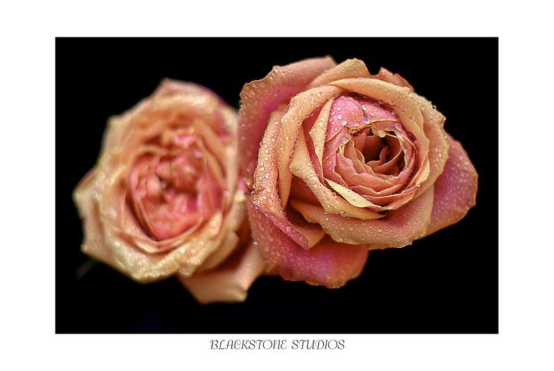 wet roses-.jpg