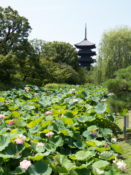 Day 10: Kyoto