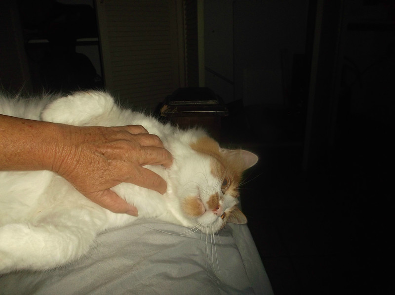 CatBelly.jpg
