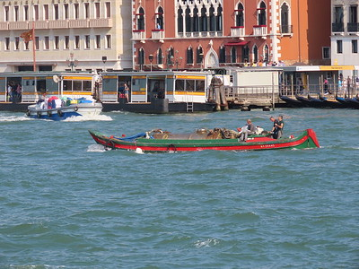 Venice - Trucks '19