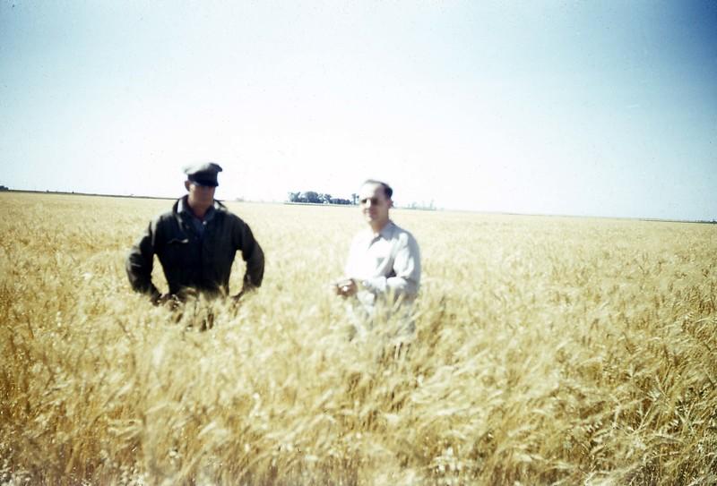 ARS040.  Unknown‡, Joey B. Burgum – wheat field - 1946‡.jpg