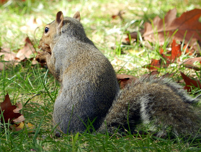 Squirrel Study, 10-16-11
