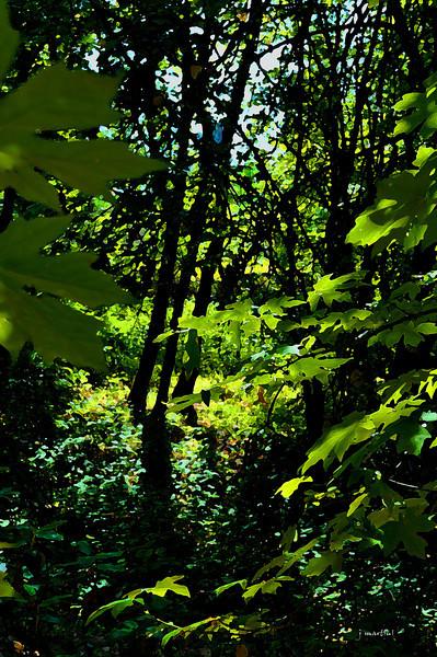 green 9-14-2011.jpg