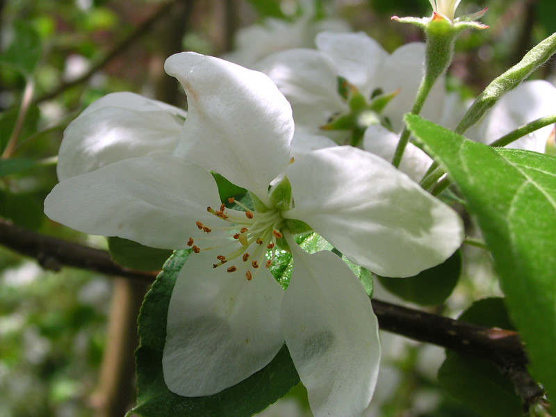 white bloom57.JPG