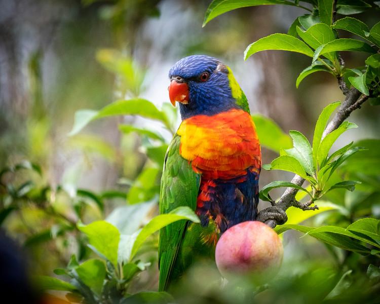 121818  birds  _20.JPG